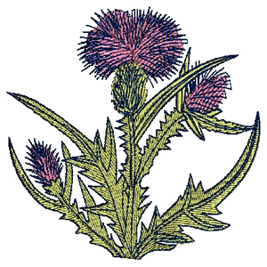 Thistle Embroidery Designs